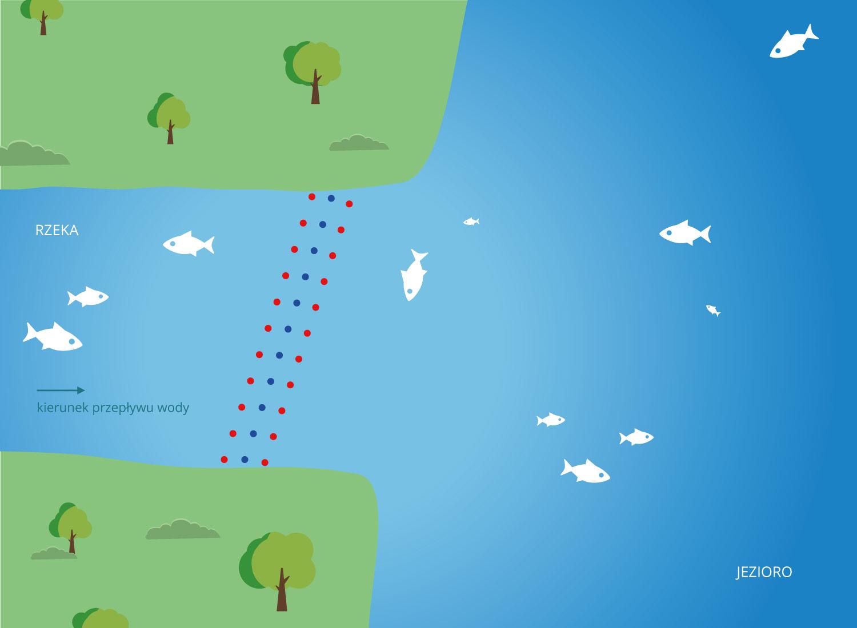 Ukierunkowanie ryb do pułapki - ochrona przed gatunkami inwazyjnymi